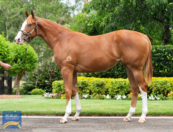 written-tycoon karuta queen-filly-1020